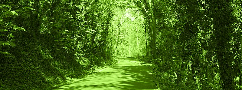 green-nature-path